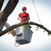A tree surgeon arborist expert working on removing a tree branch with chain saw and heavy equipment.