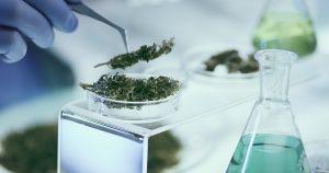 Cannabis_Security